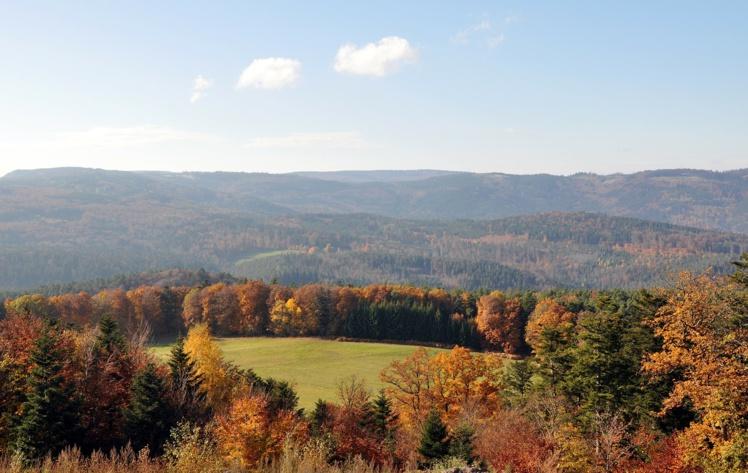 Les forêts françaises en manque de modèle de gestion