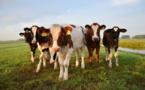Gaz à effet de serre : les géants de l'agroalimentaire pointés du doigt