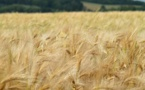 L'année 2018, un bon « cru » pour les agriculteurs français