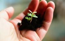 Investissement socialement responsable : l'offre s'étoffe et la performance suit